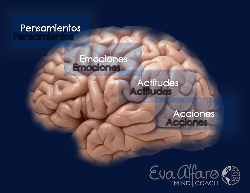 Eva Alfaro | Mind Coach